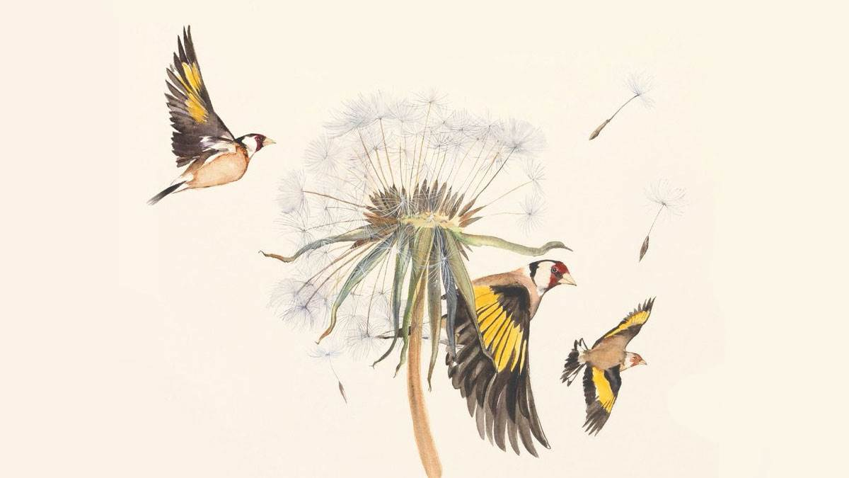 An illustration from The Lost Words of birds by a dandelion