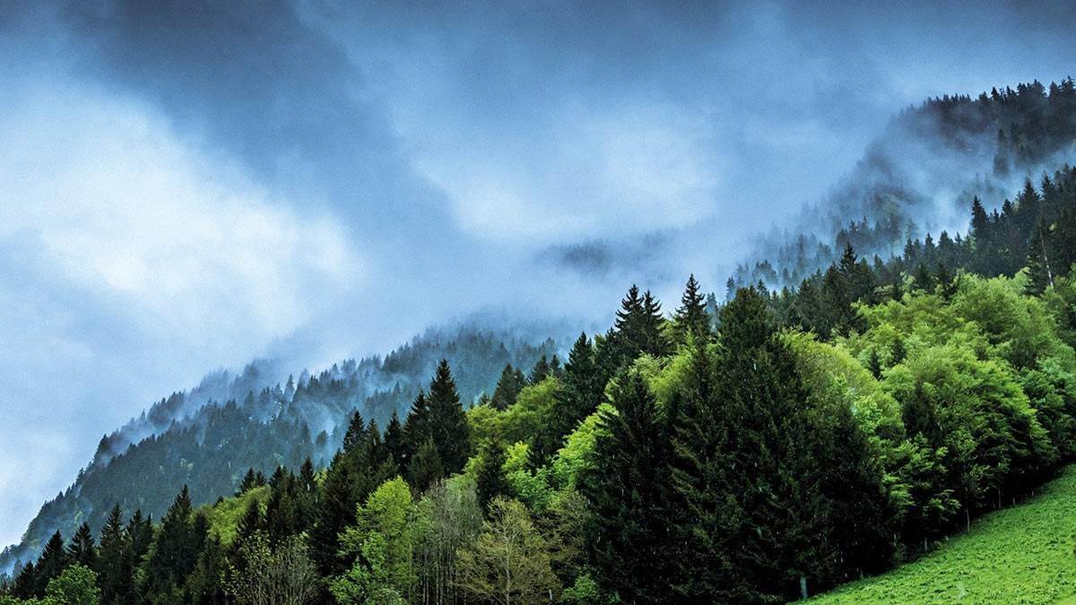 Clouds near a tree-covered mountain