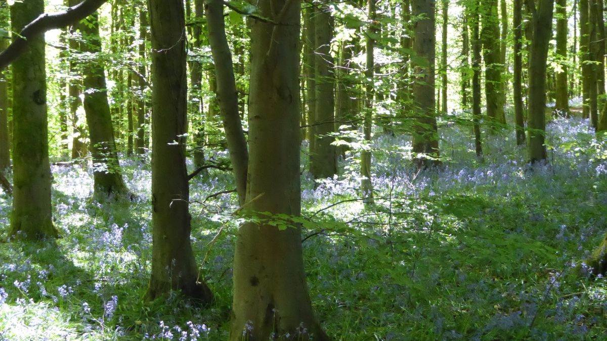 The woods at Coed Cefn
