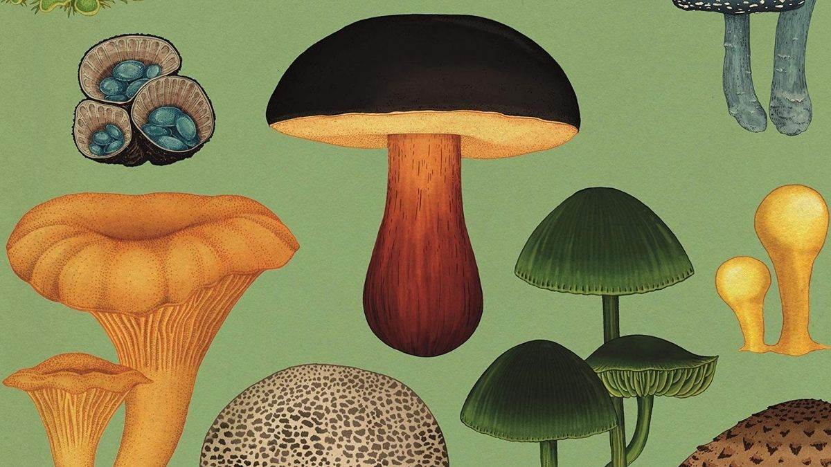 Illustration of fungi from the cover of Fungarium